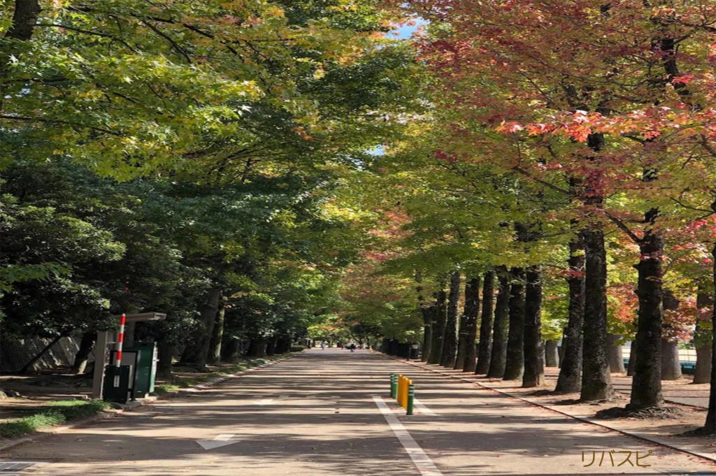 直線の道で紅葉している木が横にある絵